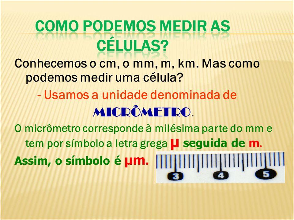 Conhecemos o cm, o mm, m, km. Mas como podemos medir uma célula