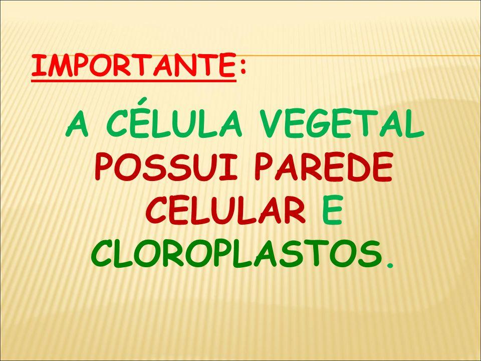 A CÉLULA VEGETAL POSSUI PAREDE CELULAR E CLOROPLASTOS.