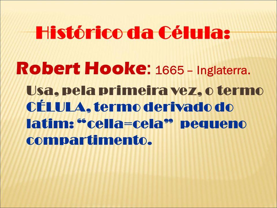 Robert Hooke: 1665 – Inglaterra.
