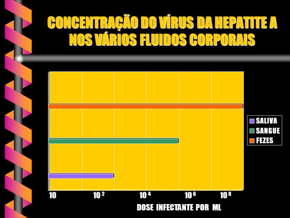 CONCENTRAÇÃO DO VÍRUS DA HEPATITE A NOS VÁRIOS FLUIDOS CORPORAIS