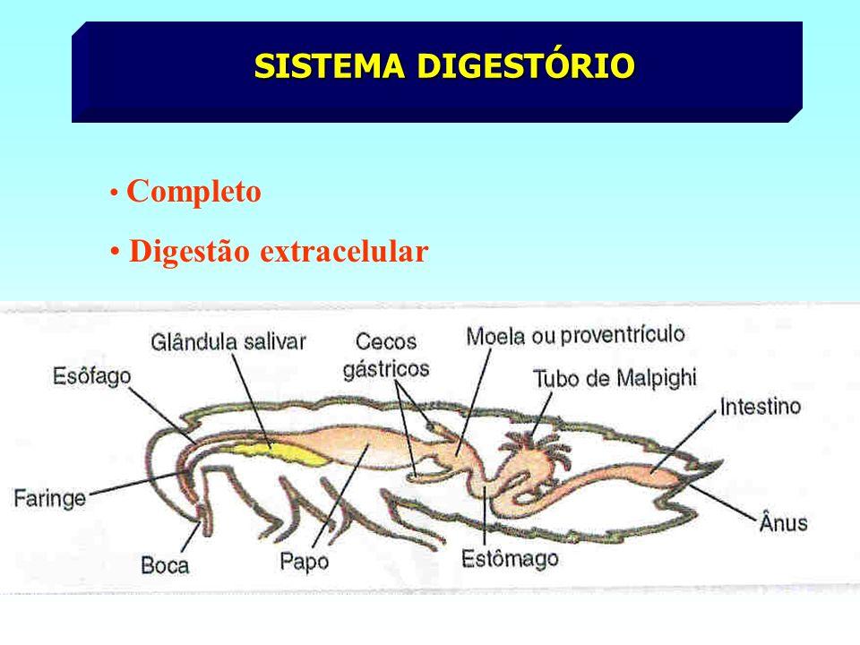 Digestão extracelular