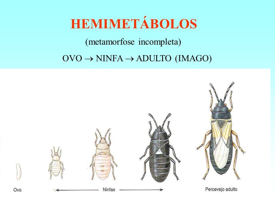 HEMIMETÁBOLOS (metamorfose incompleta) OVO  NINFA  ADULTO (IMAGO)