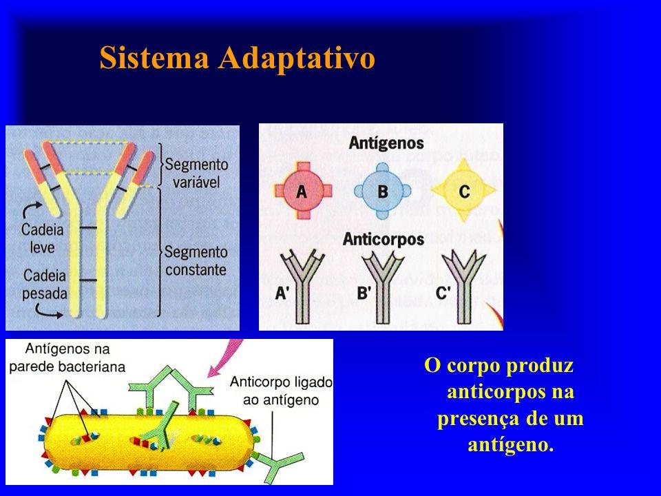 O corpo produz anticorpos na presença de um antígeno.