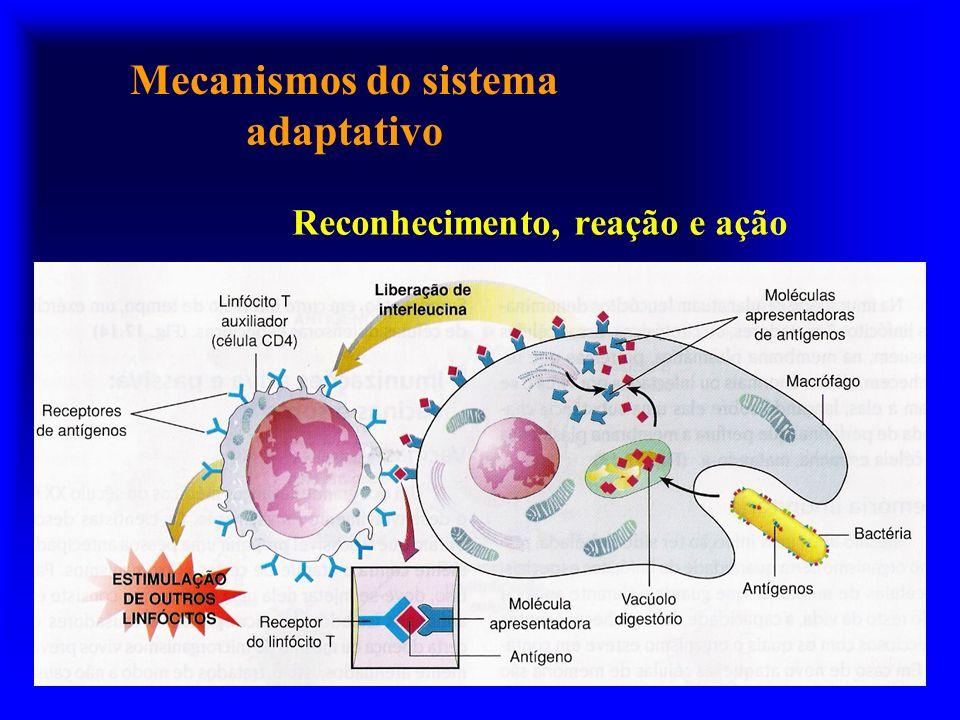 Mecanismos do sistema adaptativo