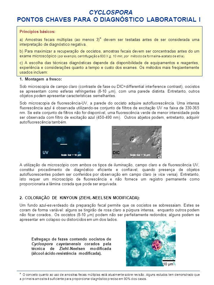 CYCLOSPORA PONTOS CHAVES PARA O DIAGNÓSTICO LABORATORIAL I