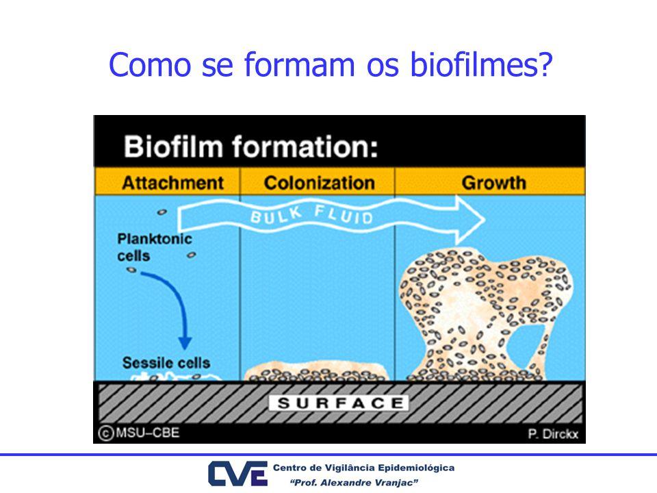 Como se formam os biofilmes