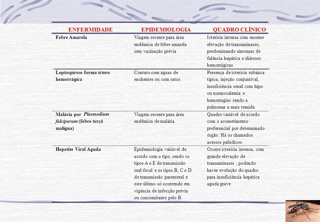 ENFERMIDADE EPIDEMIOLOGIA QUADRO CLÍNICO Febre Amarela