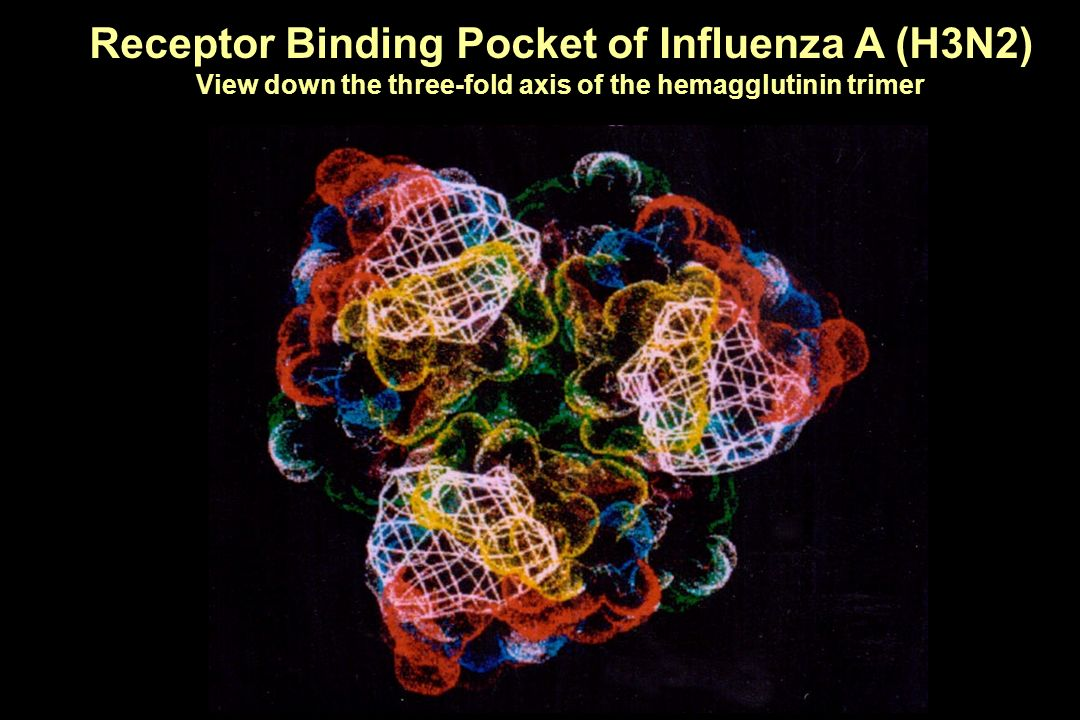 Receptor Binding Pocket of Influenza A (H3N2)