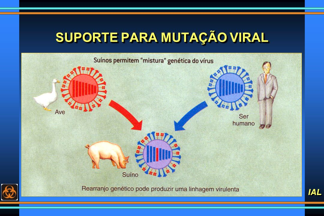 SUPORTE PARA MUTAÇÃO VIRAL