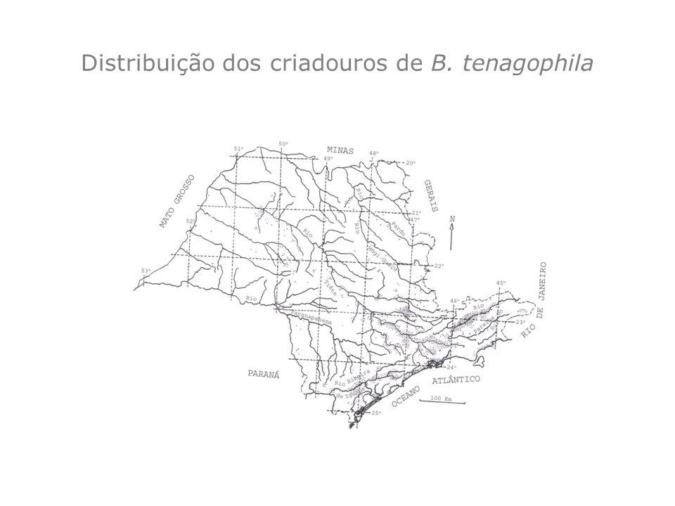 Distribuição dos criadouros de B. tenagophila