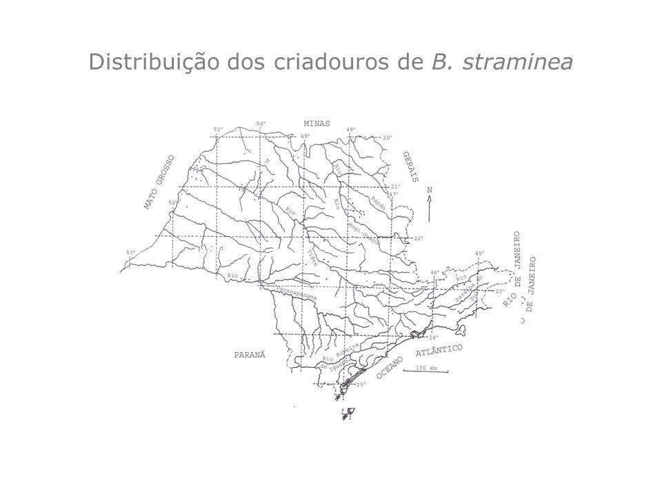 Distribuição dos criadouros de B. straminea