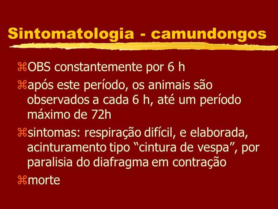 Sintomatologia - camundongos