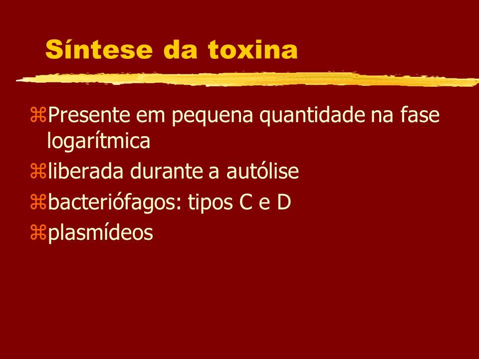 Síntese da toxina Presente em pequena quantidade na fase logarítmica