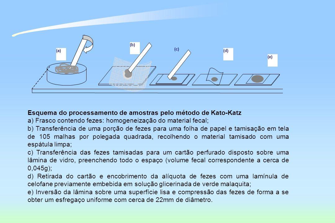 Esquema do processamento de amostras pelo método de Kato-Katz