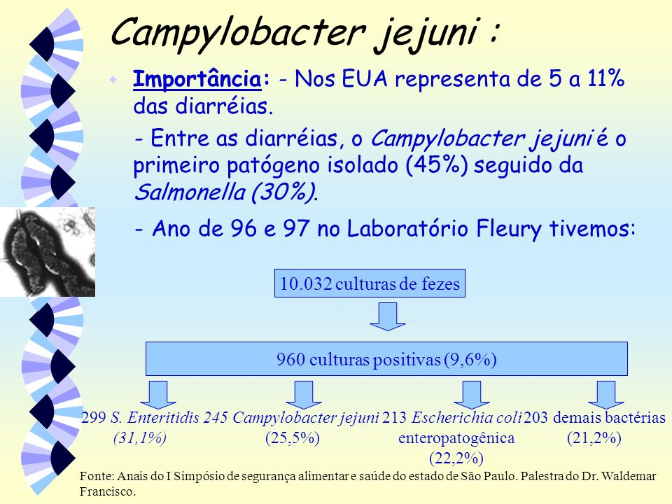 Campylobacter jejuni :