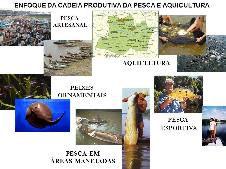 ENFOQUE DA CADEIA PRODUTIVA DA PESCA E AQUICULTURA