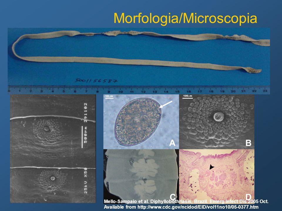Morfologia/Microscopia