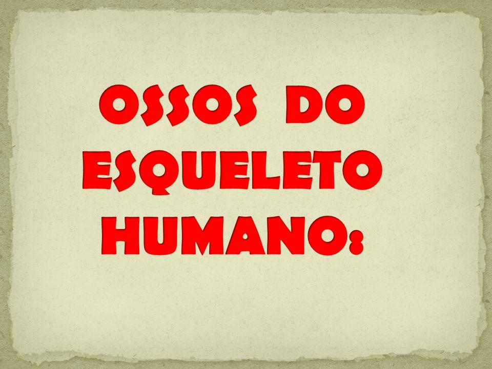OSSOS DO ESQUELETO HUMANO:
