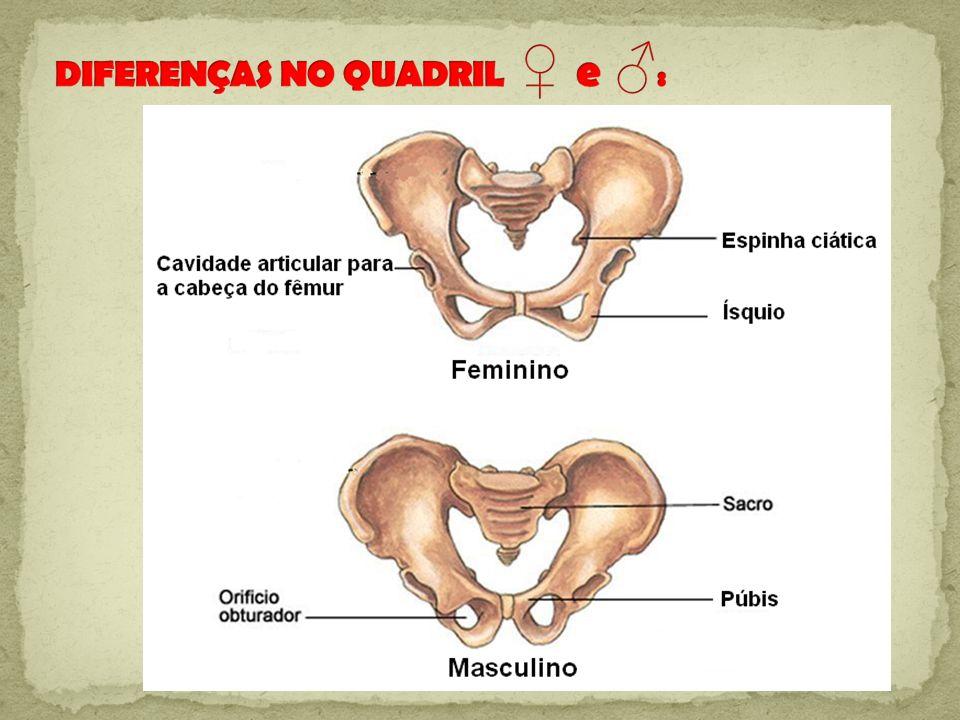 DIFERENÇAS NO QUADRIL ♀ e ♂: