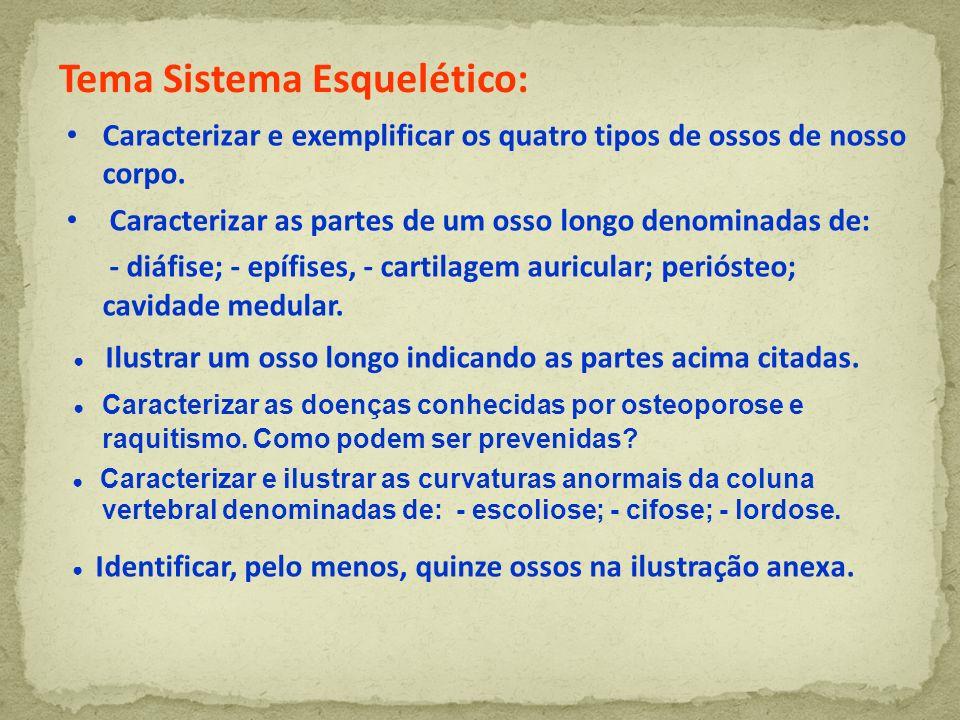 Tema Sistema Esquelético: