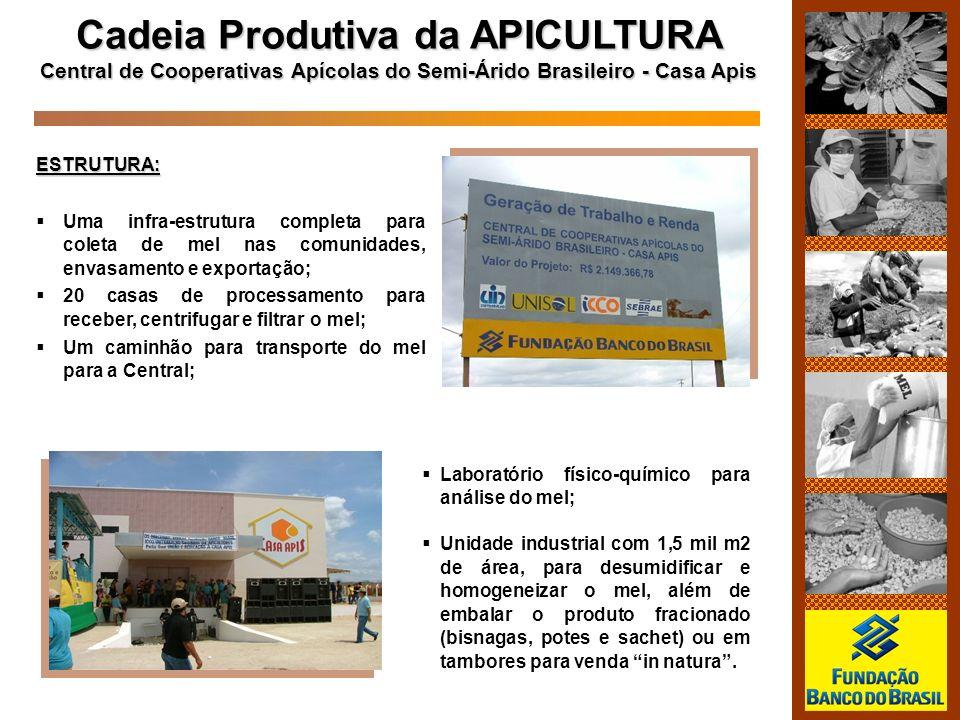 Cadeia Produtiva da APICULTURA
