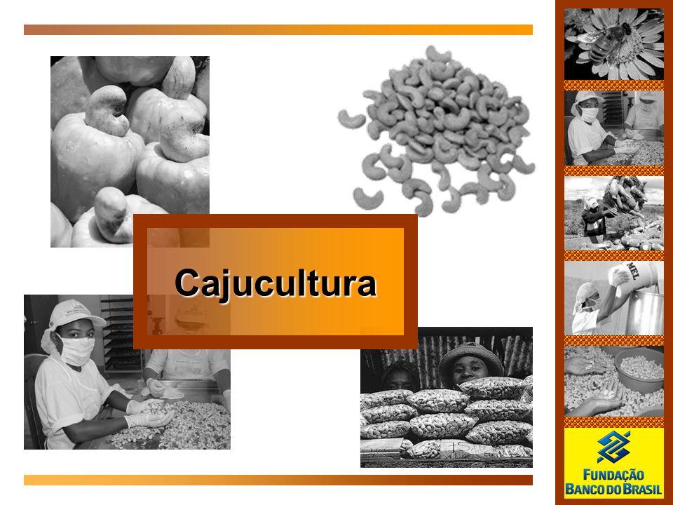 Cajucultura