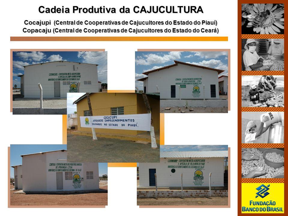 Cadeia Produtiva da CAJUCULTURA