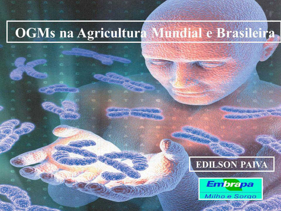 OGMs na Agricultura Mundial e Brasileira
