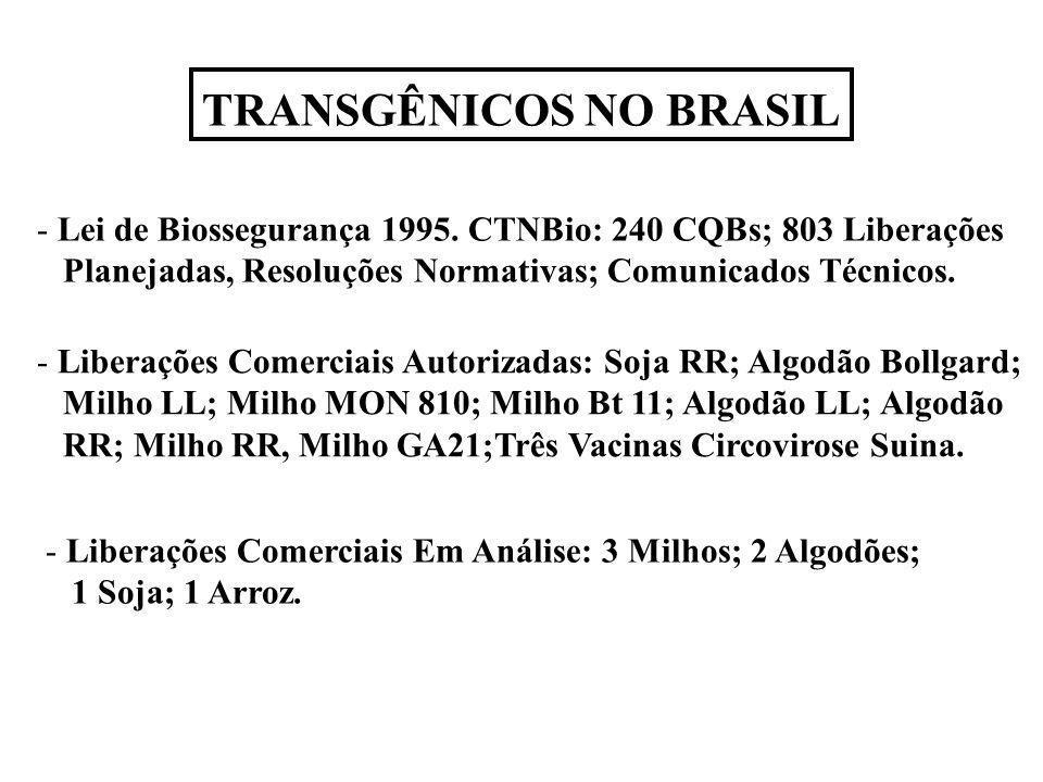 TRANSGÊNICOS NO BRASIL