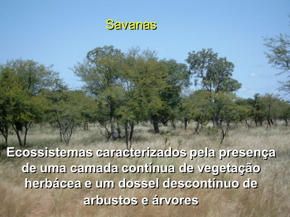 SavanasEcossistemas caracterizados pela presença de uma camada contínua de vegetação herbácea e um dossel descontínuo de arbustos e árvores.