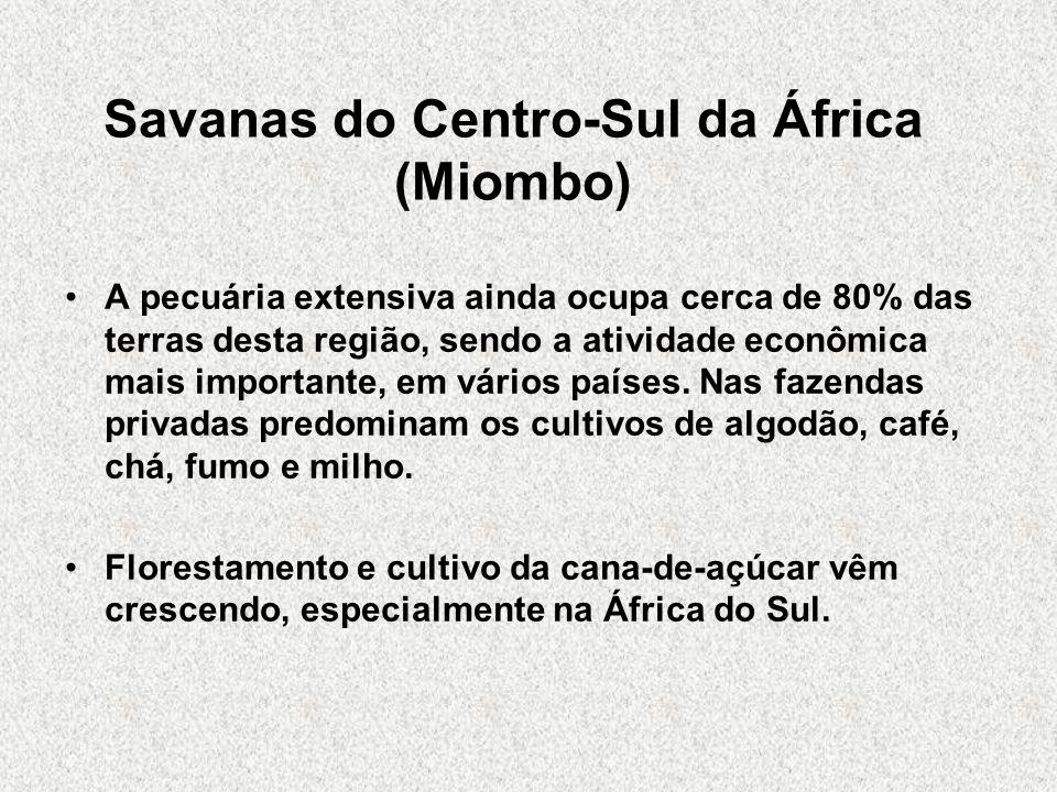Savanas do Centro-Sul da África (Miombo)