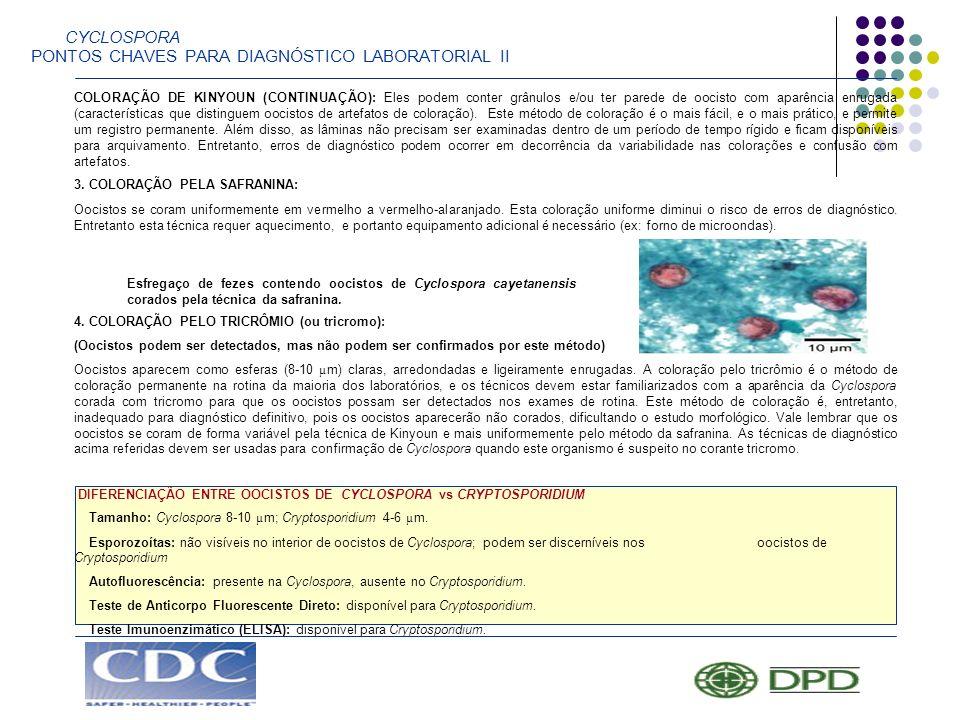 CYCLOSPORA PONTOS CHAVES PARA DIAGNÓSTICO LABORATORIAL II