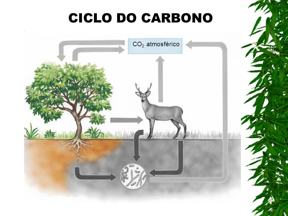 CICLO DO CARBONO CO2 atmosférico
