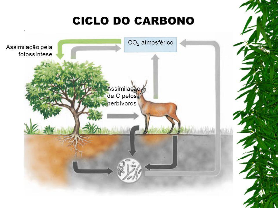 CICLO DO CARBONO CO2 atmosférico Assimilação pela fotossíntese