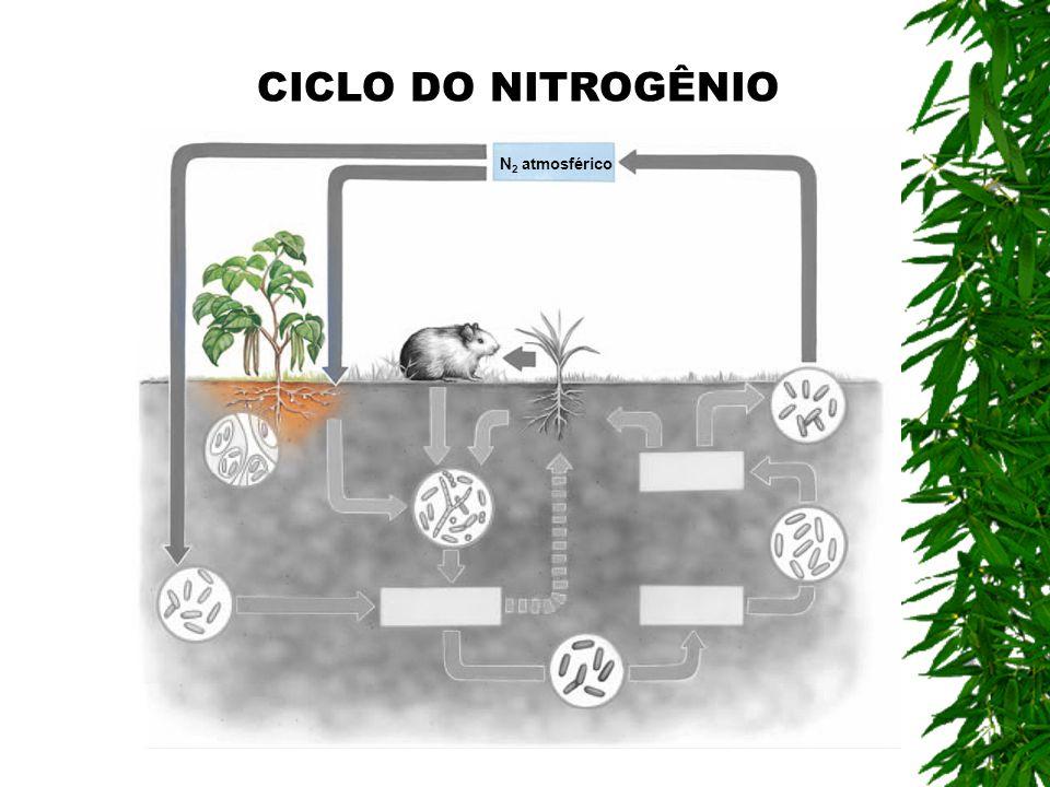 CICLO DO NITROGÊNIO N2 atmosférico
