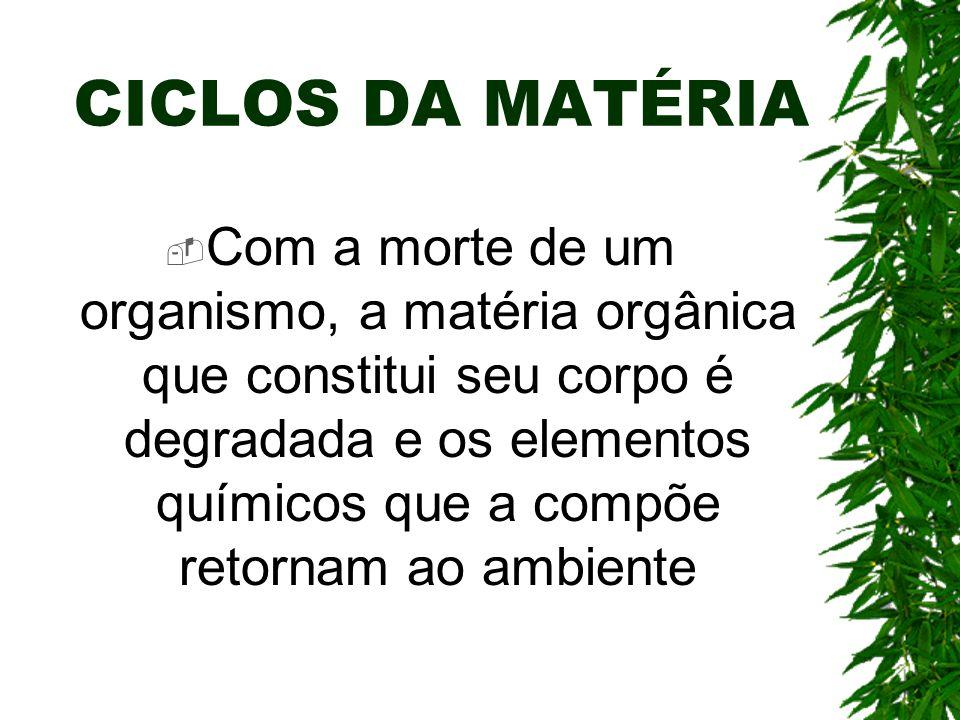 CICLOS DA MATÉRIA