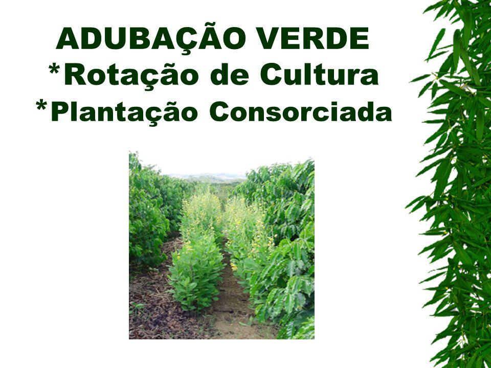 ADUBAÇÃO VERDE *Rotação de Cultura *Plantação Consorciada