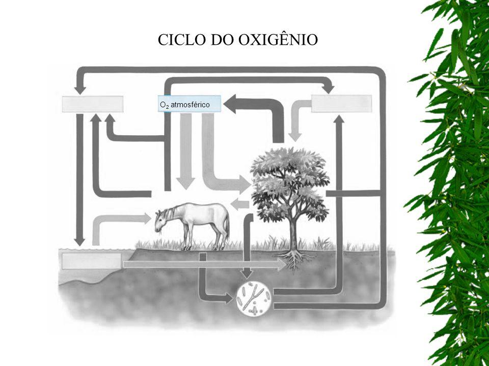 CICLO DO OXIGÊNIO O2 atmosférico