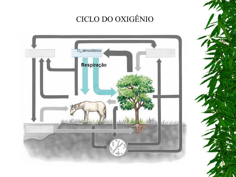 CICLO DO OXIGÊNIO O2 atmosférico Respiração
