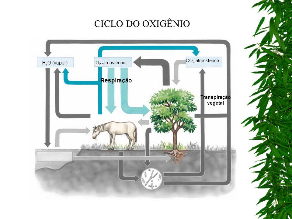 CICLO DO OXIGÊNIO Respiração H2O (vapor) Transpiração vegetal