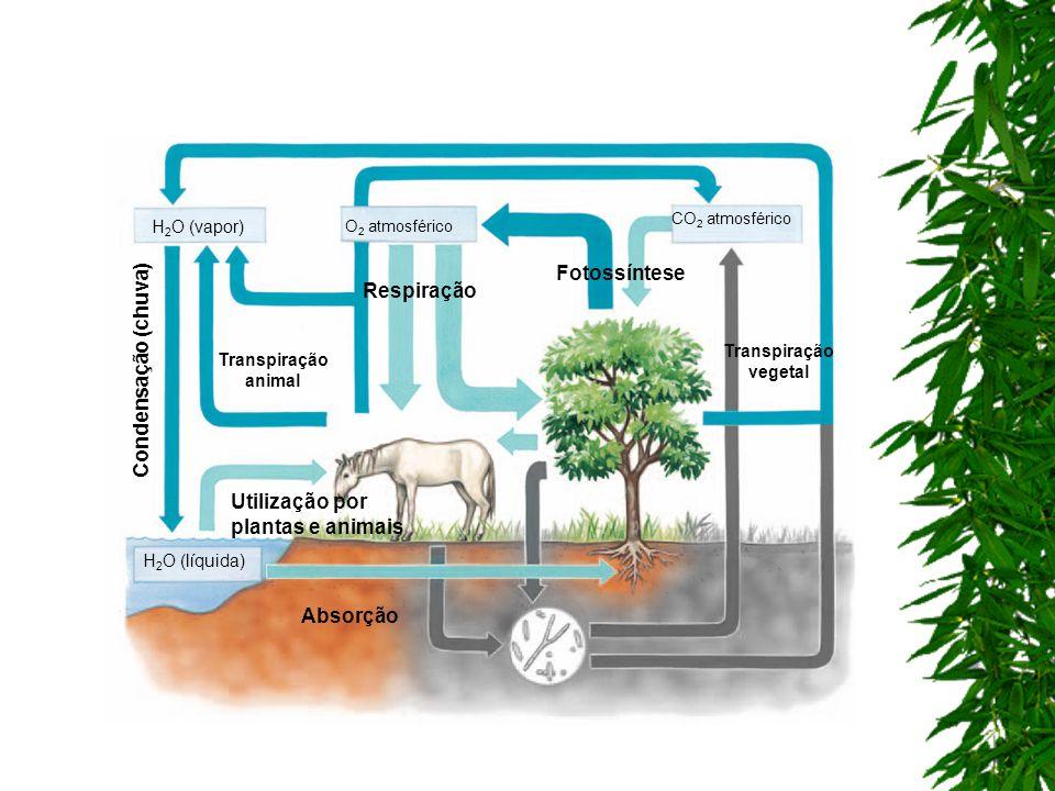 Utilização por plantas e animais