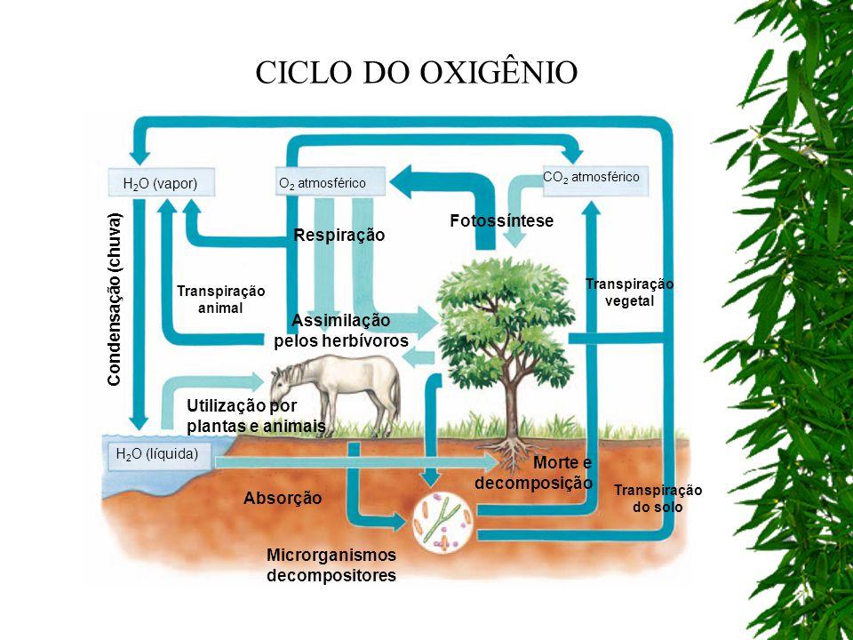 Assimilação pelos herbívoros