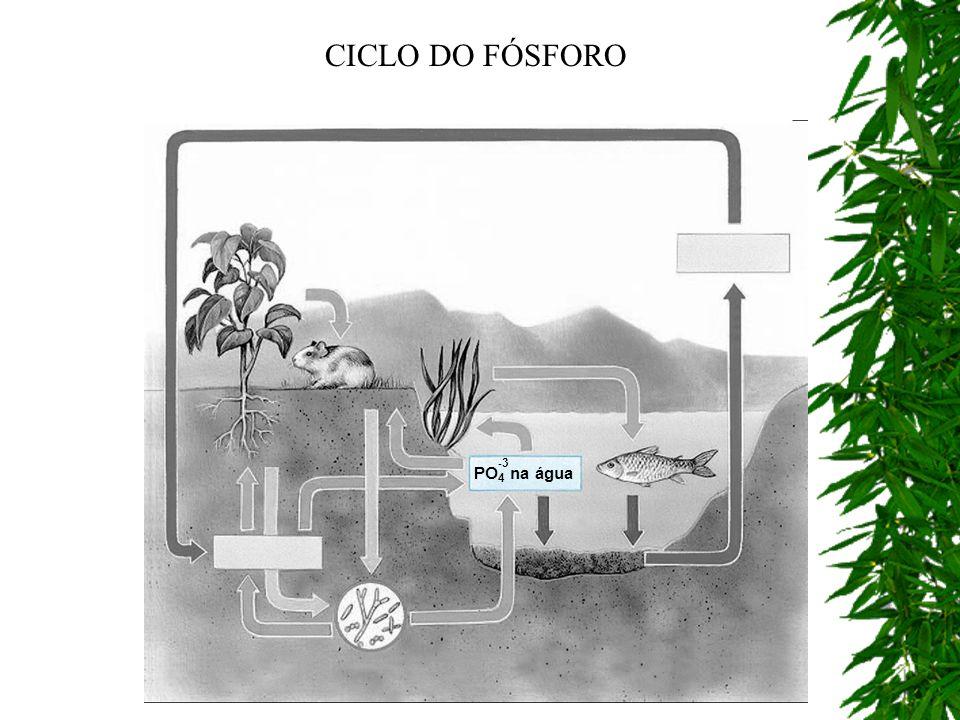 CICLO DO FÓSFORO PO4 na água -3