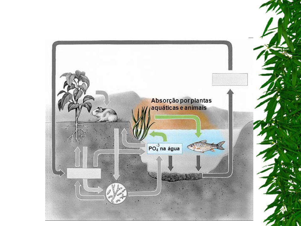 Absorção por plantas aquáticas e animais
