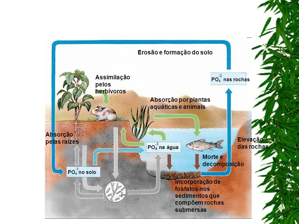 Erosão e formação do solo
