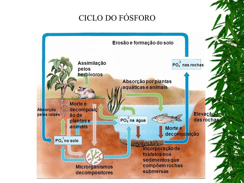 CICLO DO FÓSFORO Erosão e formação do solo