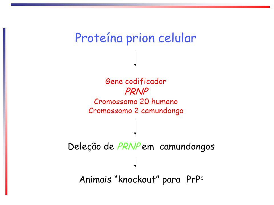 Proteína prion celular