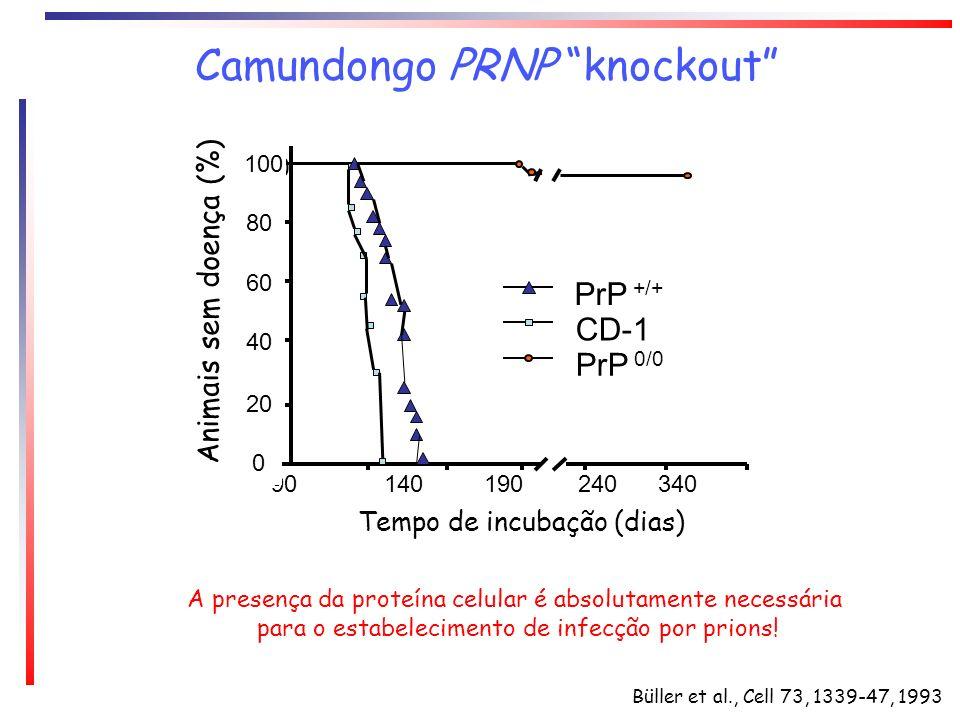 Camundongo PRNP knockout