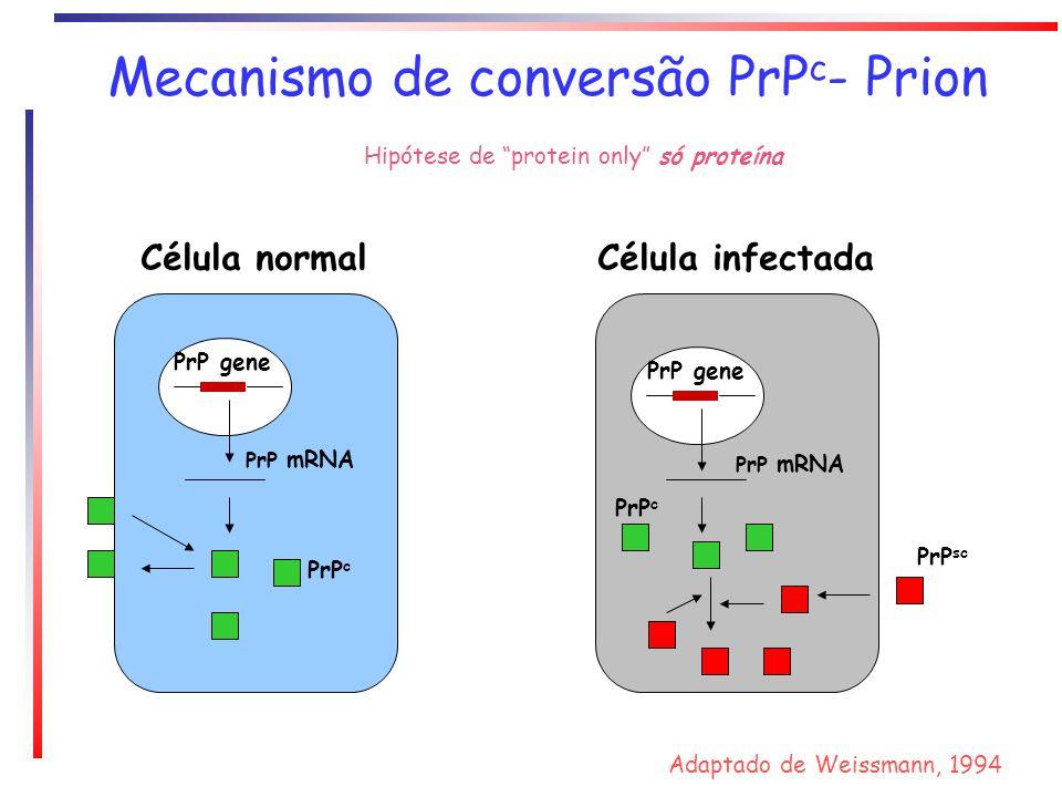 Mecanismo de conversão PrPc- Prion