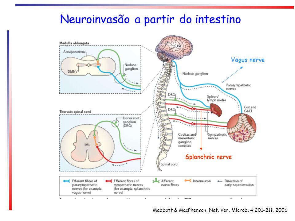 Neuroinvasão a partir do intestino